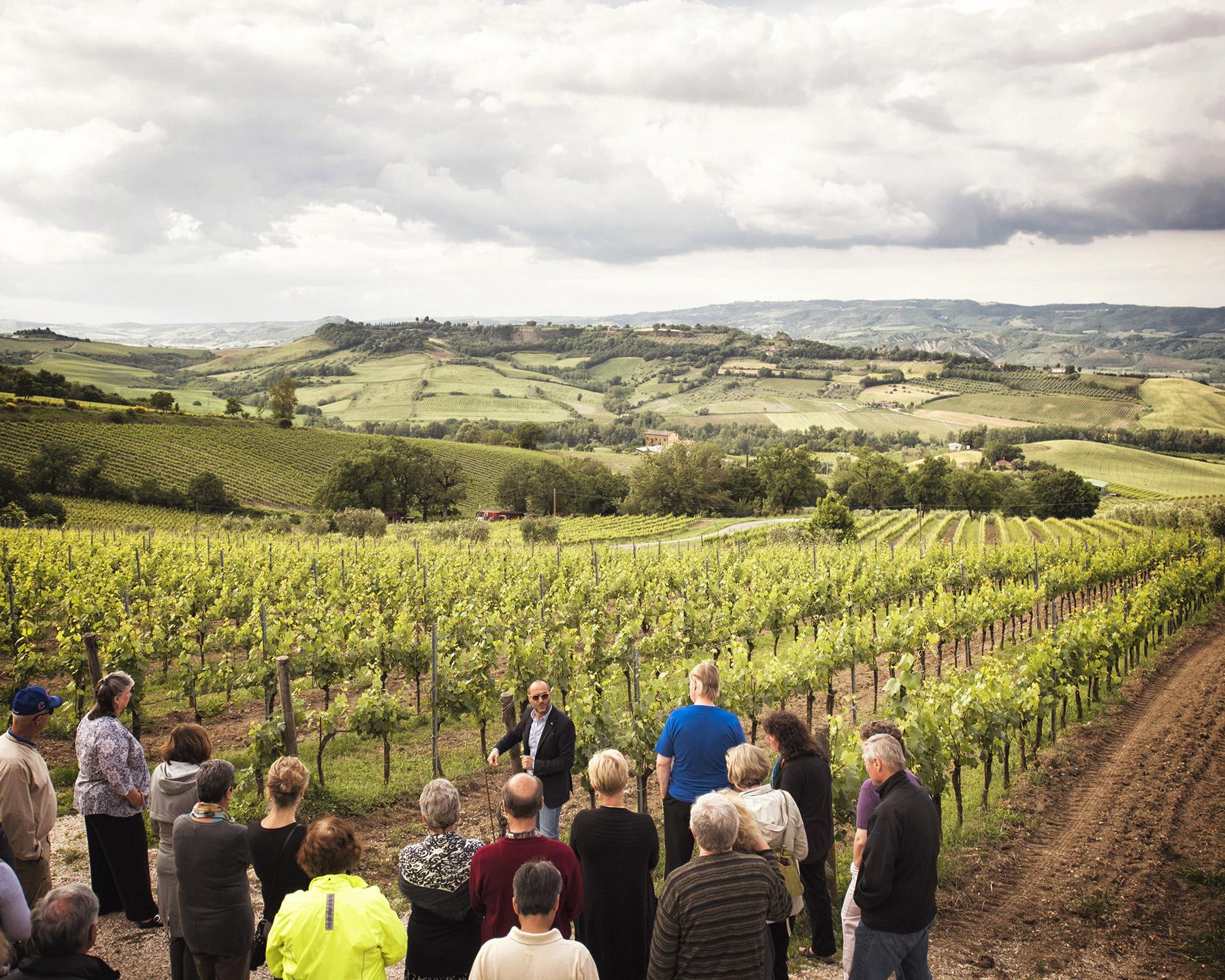 wine-tour-experience